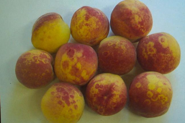 sick_peaches
